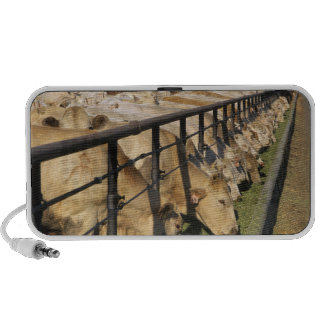 Cattle eat at a feedlot in Grandview Idaho Portable Speakers