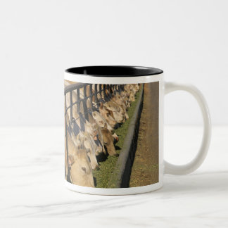 Cattle eat at a feedlot in Grandview, Idaho. Two-Tone Coffee Mug