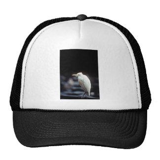 Cattle egret trucker hat