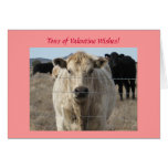 Cattle Herd Valentine Wishes - Western Greeting Card