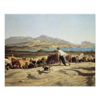 Cattle herding near Marseilles, 1853 (oil on canva Poster