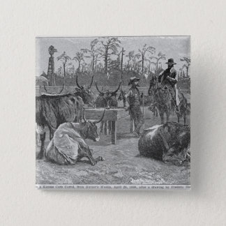 Cattle in a Kansas Corn Corral Pinback Button