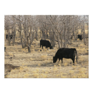 Cattle In Dormant Trees Poster