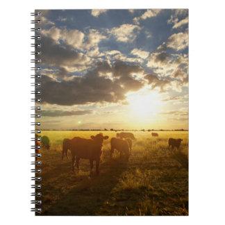 Cattle In Field, Sunset Spiral Notebook