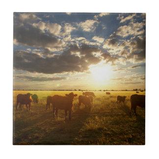 Cattle In Field, Sunset Tile