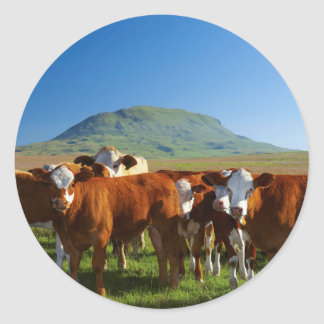 Cattle In Kamberg Valley, Kwazulu-Natal Classic Round Sticker