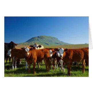 Cattle In Kamberg Valley, Kwazulu-Natal Greeting Card