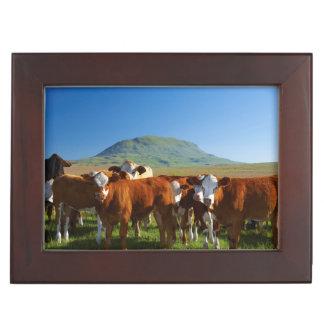 Cattle In Kamberg Valley, Kwazulu-Natal Memory Box