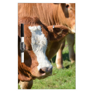 Cattle in the Isles of Scilly Dry Erase Board