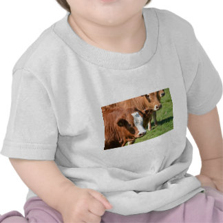 Cattle in the Isles of Scilly Shirts