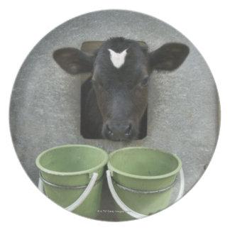 Cattle, Individual Pen Melamine Plate