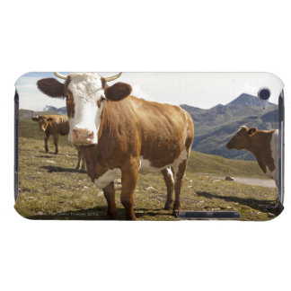 Cattle iPod Case-Mate Cases