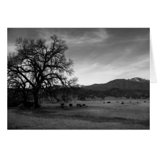 Cattle North of Stonyford, Colusa County, CA, 1966 Greeting Card