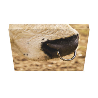 Cattle nose canvas print
