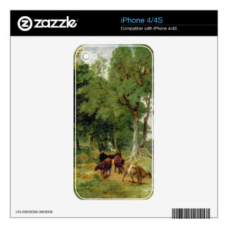 Cattle on a Devonshire Lane Skin For The iPhone 4