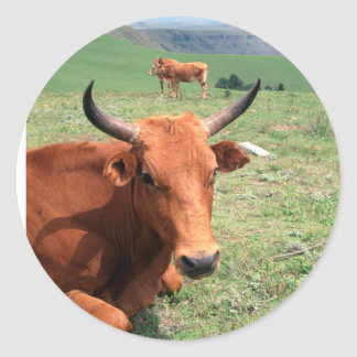 Cattle On Hill, Eastern Cape, South Africa Classic Round Sticker