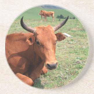 Cattle On Hill Eastern Cape South Africa Drink Coasters