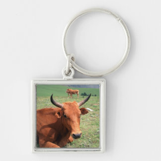Cattle On Hill, Eastern Cape, South Africa Silver-Colored Square Keychain