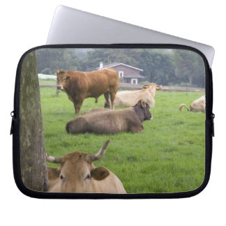 Cattle on rural farmland near the town of computer sleeve