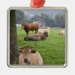 Cattle on rural farmland near the town of metal ornament