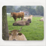 Cattle on rural farmland near the town of mouse pad