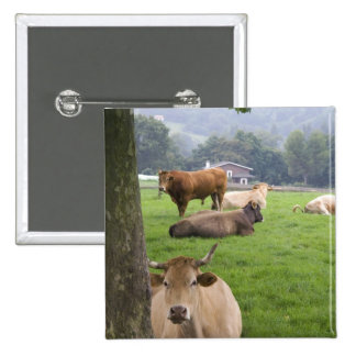Cattle on rural farmland near the town of pinback button