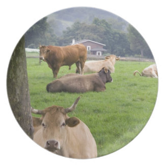 Cattle on rural farmland near the town of party plate