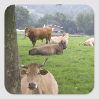 Cattle on rural farmland near the town of square sticker