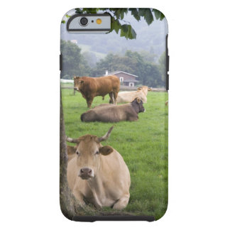 Cattle on rural farmland near the town of tough iPhone 6 case