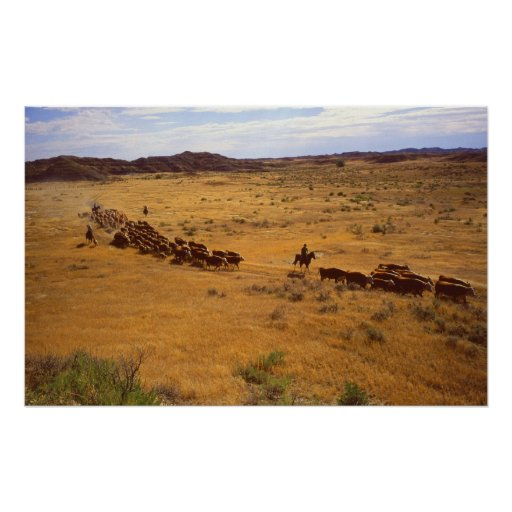 Cattle roundup poster
