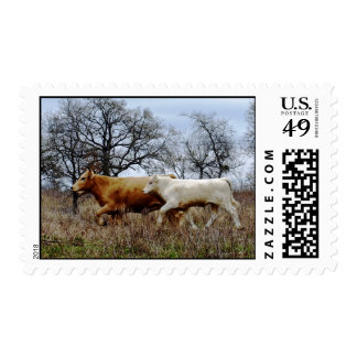 Cattle Running Postage Stamps