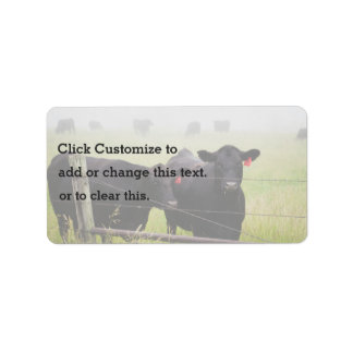 Cattle watching over fence label