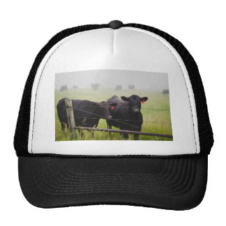Cattle watching over fence trucker hat