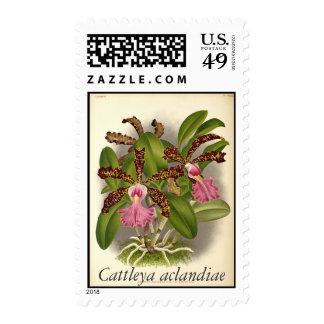 Cattleya aclandiae postage stamps