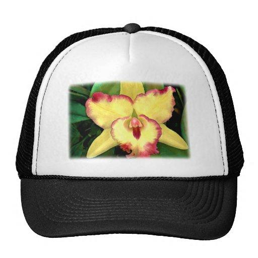 Cattleya amarillo con los volantes rojos gorras de camionero