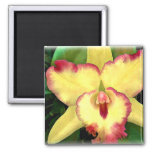 Cattleya amarillo con los volantes rojos imán de nevera