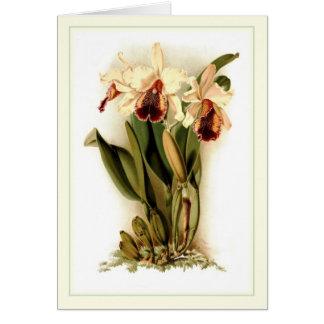 Cattleya dowiana aurea card