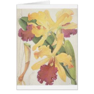 Cattleya Dowiana Greeting Card