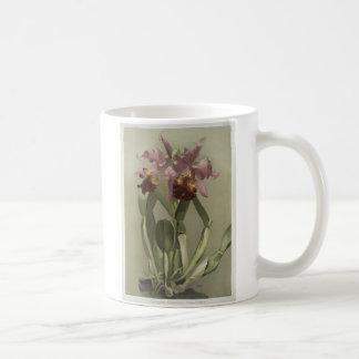 Cattleya Hardyana Orchid Mug