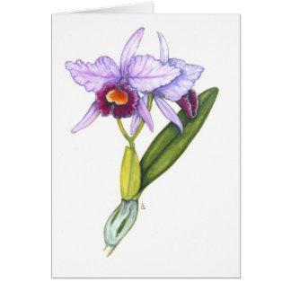 Cattleya labiata greeting card