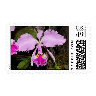 Cattleya labiata postage stamp