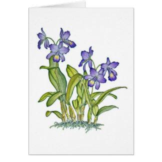 Cattleya Orchid Greeting Card
