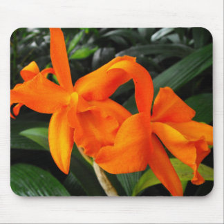 Cattleya Orchid Mouse Pad