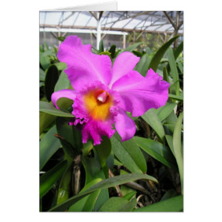 Cattleya Orchid Plant Greeting Card