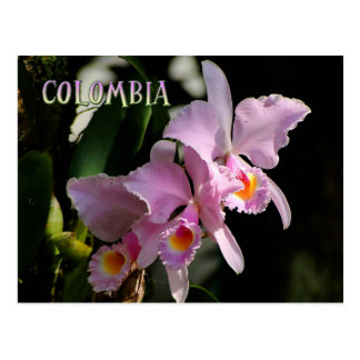 Cattleya Orchid Post Card