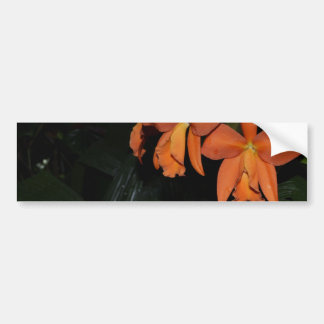 Cattleya Orchids and Tropical Plants Bumper Sticker