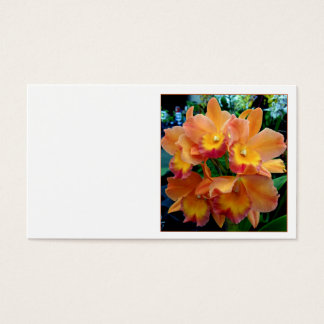 Cattleya Orchids Business Card