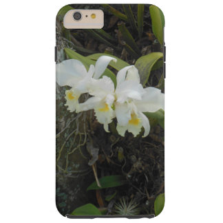 Cattleya Orchids growing on a Plumeria Tree Tough iPhone 6 Plus Case