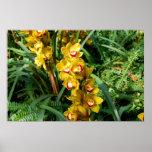 Cattleya Orchids - yellow Poster