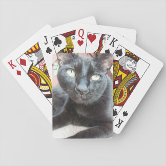 Catty Cards
